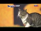 Милый котик выбежал на поле во время матча!